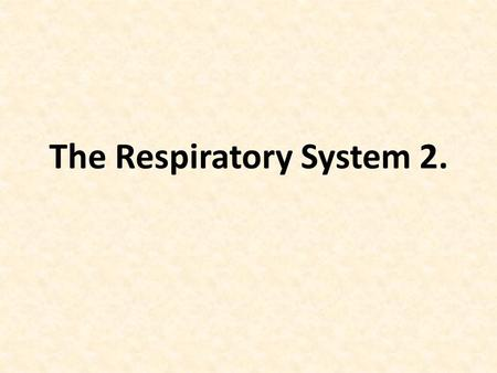 The Respiratory System 2.. The airway conducts air into the lungs Breath of air passes in sequence: Nostrils, nasal cavities, pharynx, larynx, trachea,