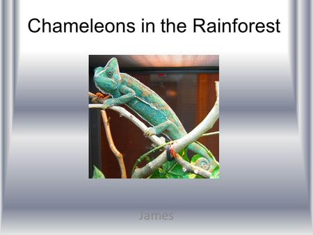 Chameleons in the Rainforest James. Introduction Tropical rainforests gives a bunch of oxygen to the world. There are four layers in the rainforest. They.