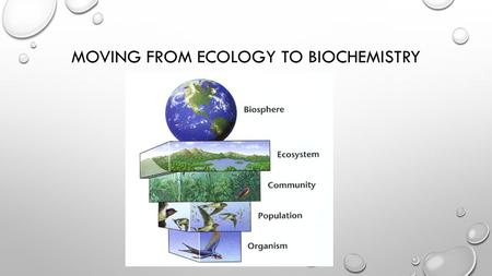 MOVING FROM ECOLOGY TO BIOCHEMISTRY. BIOCHEMISTRY LEVELS OF ORGANIZATION Organisms Organ Systems OrgansTissues CellsMoleculesAtoms Subatomic Particles.