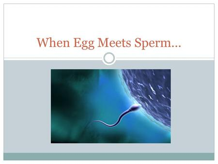 When Egg Meets Sperm…. Life Spans Unfertilized egg can only live for 24 hours Sperm usually live for 48 hours (can live up to 7 days) in a women's body.
