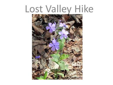 Lost Valley Hike. Students will hike about 1 ½ miles round trip along the Eden Falls Trail to learn about the importance of natural surroundings and the.