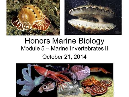 Module 5 – Marine Invertebrates II October 21, 2014