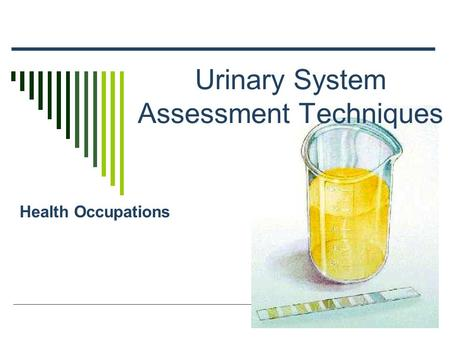 Urinary System Assessment Techniques Health Occupations.