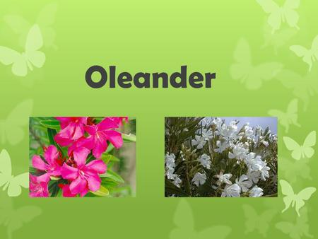 Oleander. Description Outdoor shrub commonly found in warm locations. Flowers can be pink or white all parts of this plant are poisonous to many different.