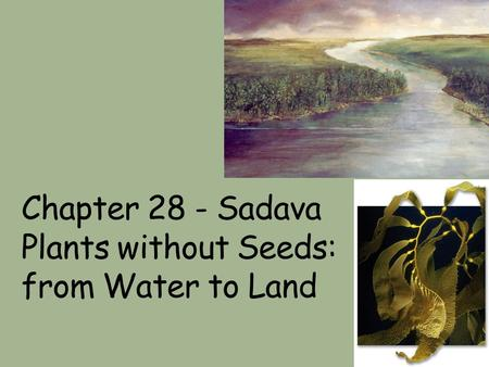 Chapter 28 - Sadava Plants without Seeds: from Water to Land.