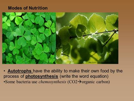 Modes of Nutrition Autotrophs have the ability to make their own food by the process of photosynthesis (write the word equation) Some bacteria use chemosynthesis.