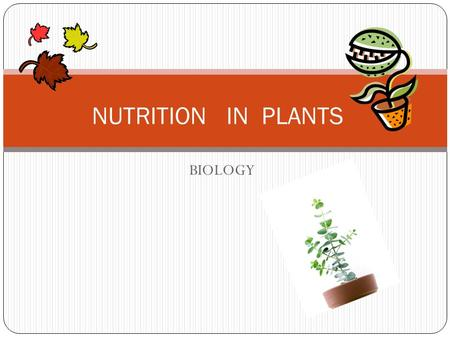 BIOLOGY NUTRITION IN PLANTS. AUTOTROPHS THE PLANTS THAT MAKE THEIR OWN FOOD IS KNOW AS AUTOTROPHS.THE GREEN PLANTS PREPARE THEIR OWN FOOD WITH THE HELP.