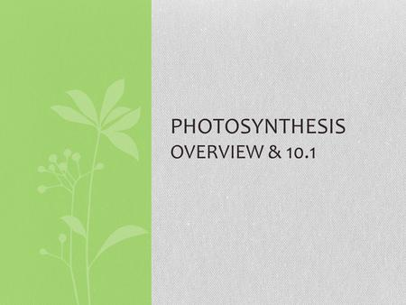 PHOTOSYNTHESIS OVERVIEW & 10.1. OVERVIEW The Process That Feeds the Biosphere Life on Earth is solar powered. Photosynthesis: conversion of light energy.
