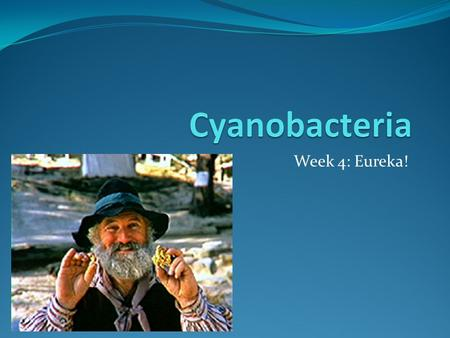 Week 4: Eureka!. Phone conversation with Professor Susan Golden at Texas A&M: Professor Golden is one of the leading experts in cyanobacteria and has.