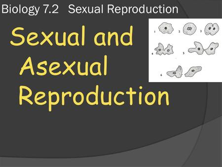 Biology 7.2 Sexual Reproduction Sexual and Asexual Reproduction.