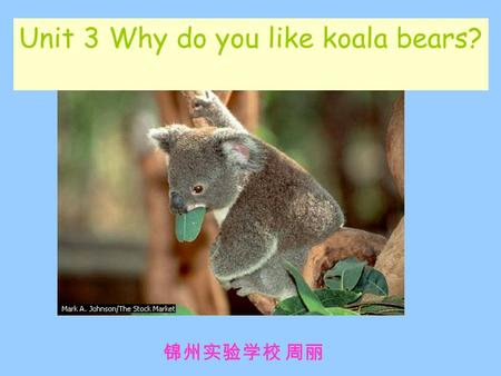 Unit 3 Why do you like koala bears? 锦州实验学校 周丽. make a conversation( 编对话) about animals.