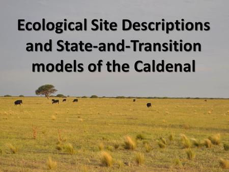 Ecological Site Descriptions and State-and-Transition models of the Caldenal.