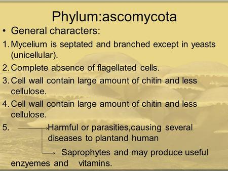 Phylum:ascomycota General characters: