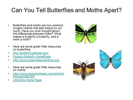 Can You Tell Butterflies and Moths Apart? Butterflies and moths are two common winged insects that add beauty to our world. Have you ever thought about.