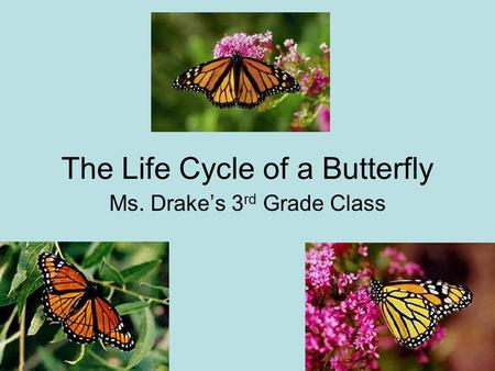 The Life Cycle of a Butterfly Ms. Drake's 3 rd Grade Class.