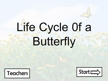 Life Cycle 0f a Butterfly Requirements Students: -Elementary Grades 3 rd and 4 th -Middle Class -Science class that is learning about butterflies Environment: