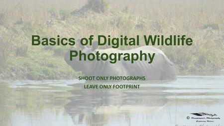 Basics of Digital Wildlife Photography SHOOT ONLY PHOTOGRAPHS LEAVE ONLY FOOTPRINT ©