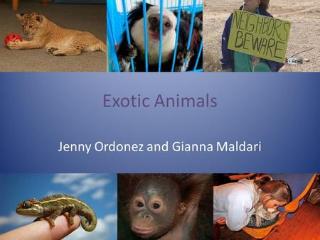 Exotic Animals Jenny Ordonez and Gianna Maldari. The Issue… Should exotic animals be kept as pets? Some think…exotic animals are not meant to be caged.