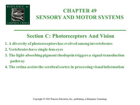 CHAPTER 49 SENSORY AND MOTOR SYSTEMS Copyright © 2002 Pearson Education, Inc., publishing as Benjamin Cummings Section C: Photoreceptors And Vision 1.