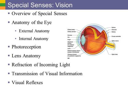 Special Senses: Vision  Overview of Special Senses  Anatomy of the Eye External Anatomy Internal Anatomy  Photoreception  Lens Anatomy  Refraction.