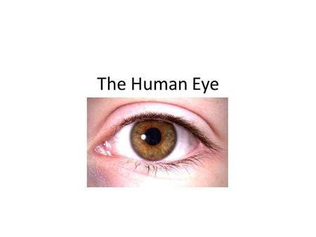 The Human Eye. In many ways, the human eye is similar to a camera. Light enters through an opening, is focused through a lens, passes through a light-tight.