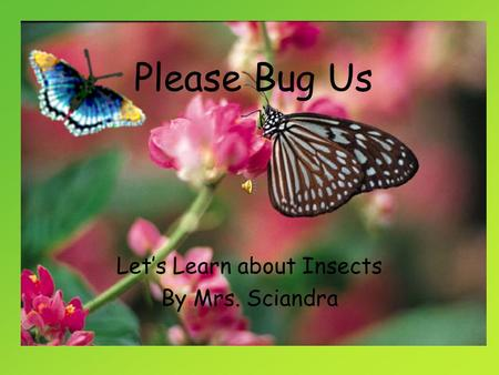 Please Bug Us Let's Learn about Insects By Mrs. Sciandra.