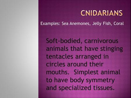 Examples: Sea Anemones, Jelly Fish, Coral Soft-bodied, carnivorous animals that have stinging tentacles arranged in circles around their mouths. Simplest.
