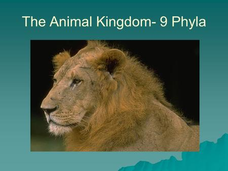 The Animal Kingdom- 9 Phyla. Terminology  Symmetry- –Divisible into similar halves.