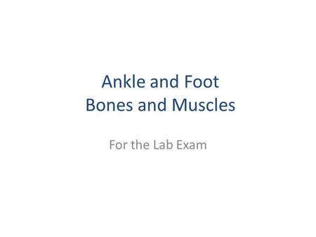 Ankle and Foot Bones and Muscles For the Lab Exam.