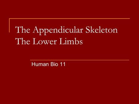 The Appendicular Skeleton The Lower Limbs Human Bio 11.