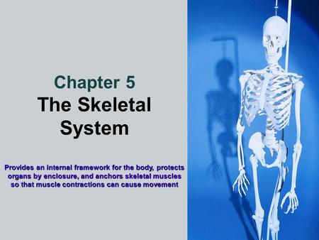 Chapter 5 The Skeletal System Provides an internal framework for the body, protects organs by enclosure, and anchors skeletal muscles so that muscle contractions.