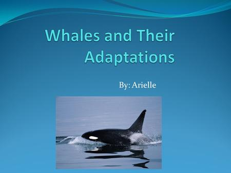 By: Arielle introduction Do you want to know about whales and all of their adaptations? Well I know all about whales. So sit back and enjoy as I show.