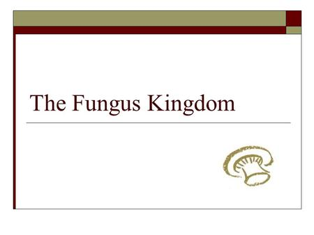 "The Fungus Kingdom. Welcome to the Fungus Kingdom!  Activity: Watch this video clip and write down all the different references made to fungi  ""Fungus."