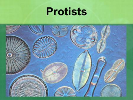Protists. Protist Characteristics An extremely diverse group Eukaryotes Mostly unicellular some colonial some multicellular Some heterotrophic, some autotrophic,