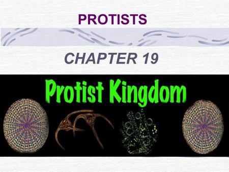 PROTISTS CHAPTER 19. KINGDOM PROTISTA (most diverse kingdom) All are eukaryotic Unicellular or multi- cellular Microscopic or very large Heterotrophic.