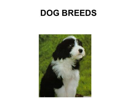 DOG BREEDS. Dog breeds DNA evidence now suggests that dogs are directly related to wolves Species name is now Canis lupus Breed variation is great, from.