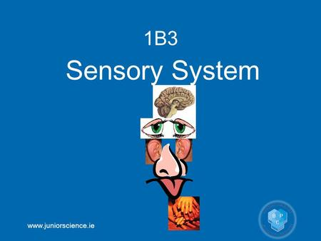 Www.juniorscience.ie 1B3 Sensory System. www.juniorscience.ie 1B3 Sensory System OB30locate the main parts of the eye on a model or diagram and describe.