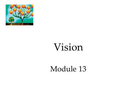 Vision Module 13. Transduction In sensation, transformation of stimulus energy into neural impulses. Phototransduction: Conversion of light energy into.