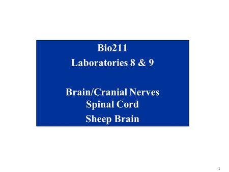 1 Bio211 Laboratories 8 & 9 Brain/Cranial Nerves Spinal Cord Sheep Brain.