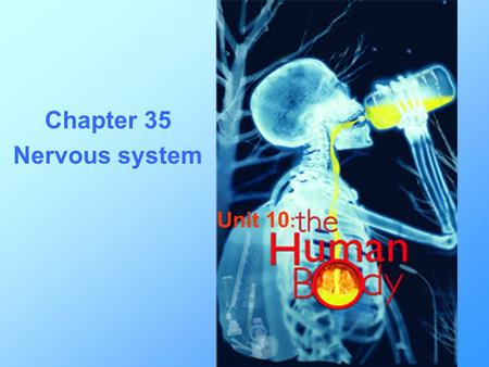 Chapter 35 Nervous system Unit 10 :. Tissue Types: Epithelial Connective Muscle Nervous.