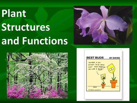 Plant Structures and Functions. Structures and Functions Structure- means a part. Examples: roots, stems, and leaves. Function- means a job.