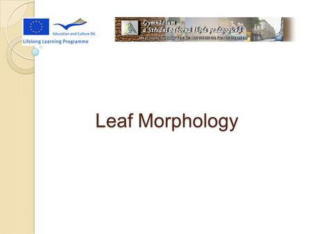 Leaf Morphology. What Is Leaf Morphology Leaf Morphology is the study of the external feature of leaves. It is useful for classification.