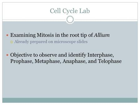 Cell Cycle Lab Examining Mitosis in the root tip of Allium  Already prepared on microscope slides Objective to observe and identify Interphase, Prophase,