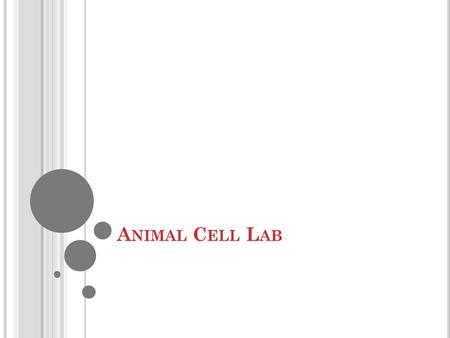 A NIMAL C ELL L AB. D O, L EARN, C ONNECT Do: Animal Cell Lab Learn: I can compare an actual animal cell to a model of an animal cell. Connect: Models.