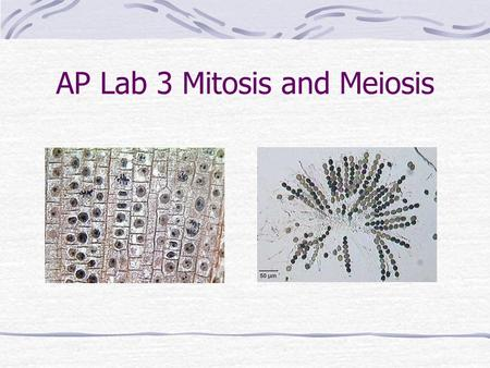 Top 3 Experiments to Demonstrate Mitosis and Meiosis in Animals