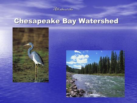 All about the….. Chesapeake Bay Watershed. About the Watershed…..  The Chesapeake Bay Watershed is the biggest of 130 estuaries in the U.S. and include.