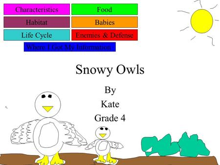 Snowy Owls By Kate Grade 4 Characteristics Habitat Life Cycle Food Babies Enemies & Defense Where I Got My Information.