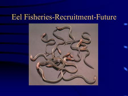 Eel Fisheries-Recruitment-Future. Decline of Eel Populations??? Outside safe Biological limits? How are we influencing change? Can we manage the population.