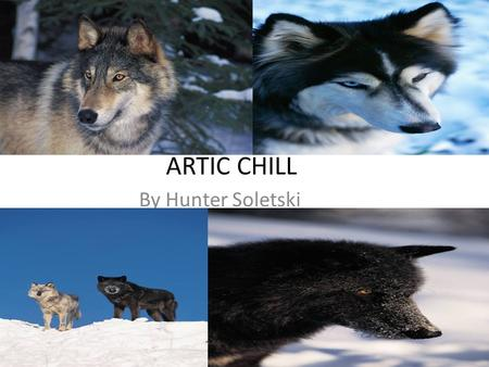 ARTIC CHILL By Hunter Soletski.