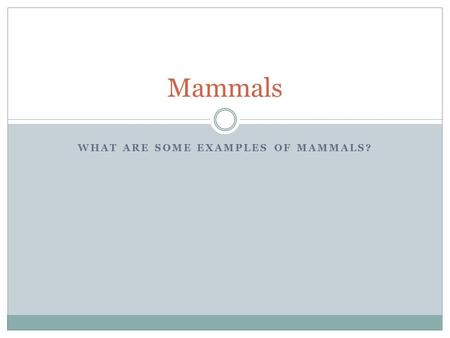 WHAT ARE SOME EXAMPLES OF MAMMALS? Mammals. Mammals are highly developed warm-blooded vertebrates that have hair on their body. Mammals feed on their.